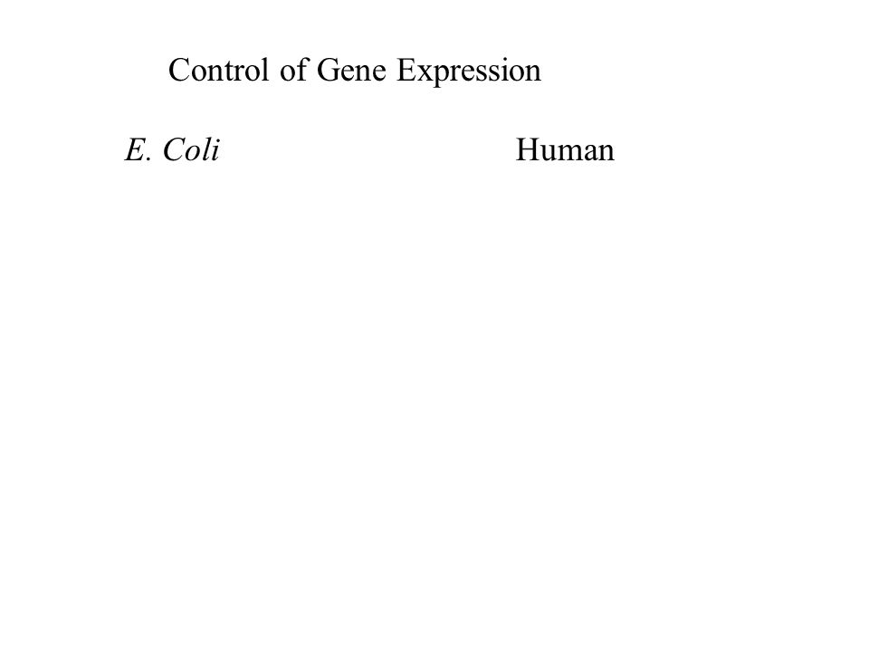 Eukaryotic Cells Structure correlates with Function 40.3