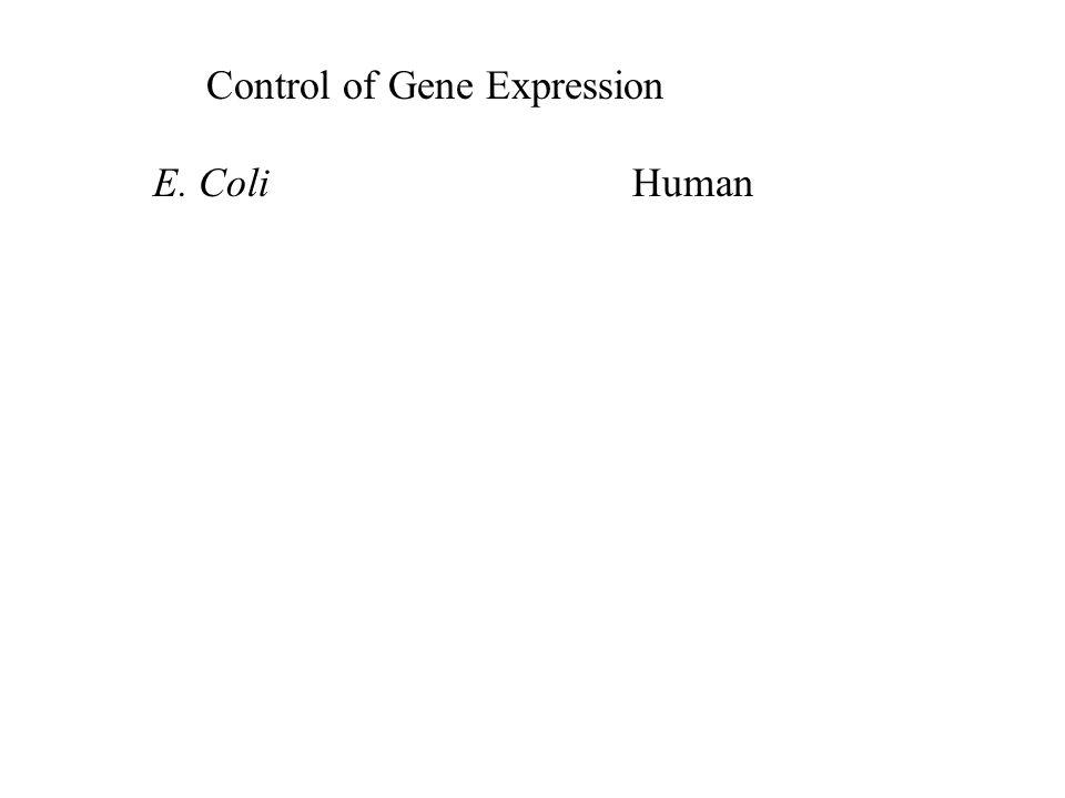 Control of Gene Expression E. ColiHuman