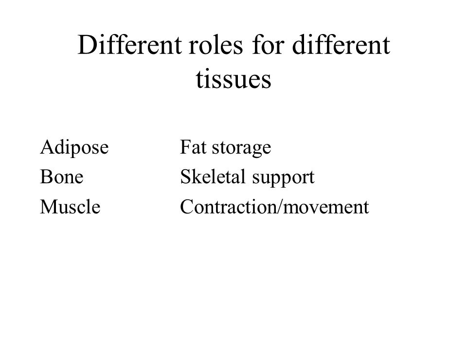 Different roles for different tissues AdiposeFat storage BoneSkeletal support MuscleContraction/movement