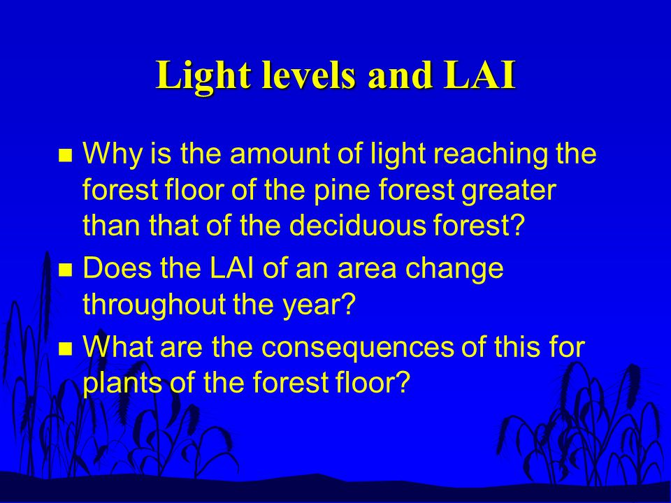 Light levels and LAI n Why is the amount of light reaching the forest floor of the pine forest greater than that of the deciduous forest.