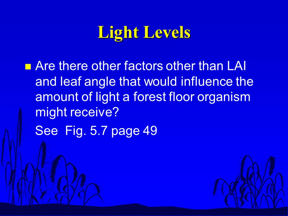 Light Levels n Are there other factors other than LAI and leaf angle that would influence the amount of light a forest floor organism might receive.