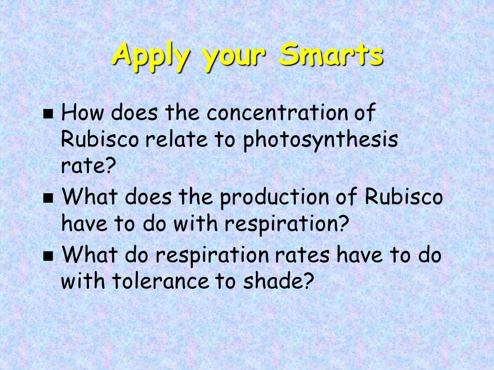 Apply your Smarts n How does the concentration of Rubisco relate to photosynthesis rate.