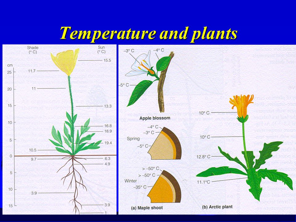 Temperature and plants