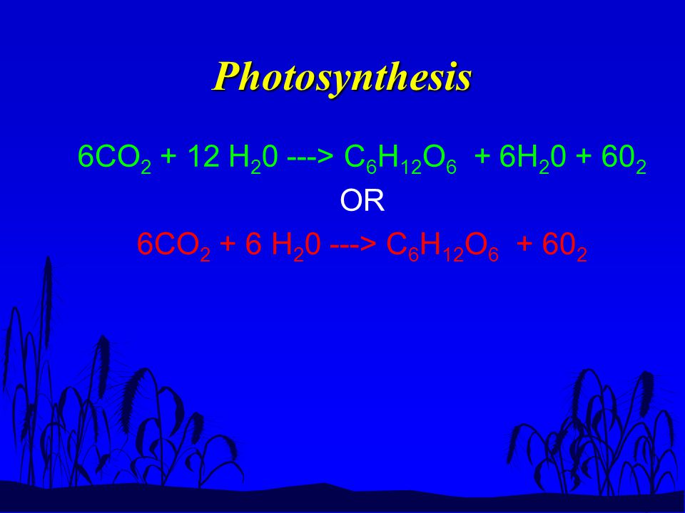 Photosynthesis 6CO 2 + 12 H 2 0 ---> C 6 H 12 O 6 + 6H 2 0 + 60 2 OR 6CO 2 + 6 H 2 0 ---> C 6 H 12 O 6 + 60 2