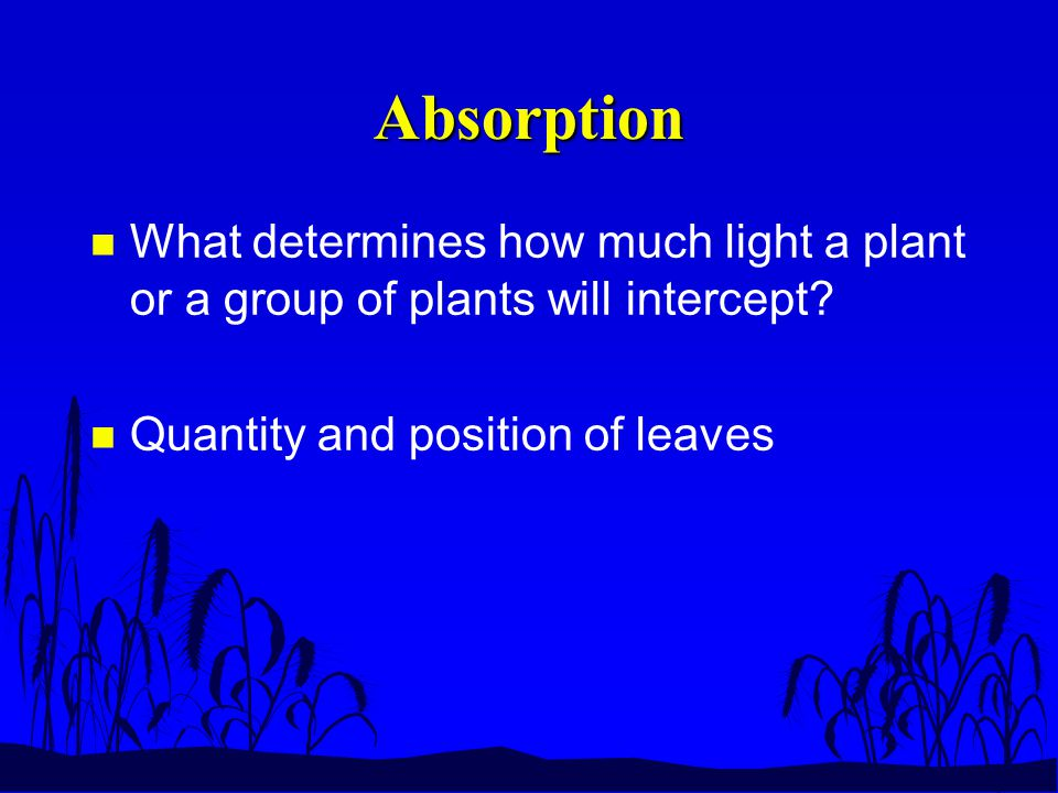 Absorption n What determines how much light a plant or a group of plants will intercept.