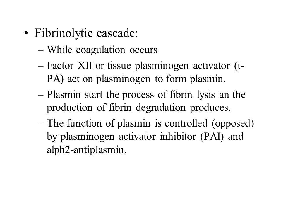 Fibrinolytic cascade: –While coagulation occurs –Factor XII or tissue plasminogen activator (t- PA) act on plasminogen to form plasmin.