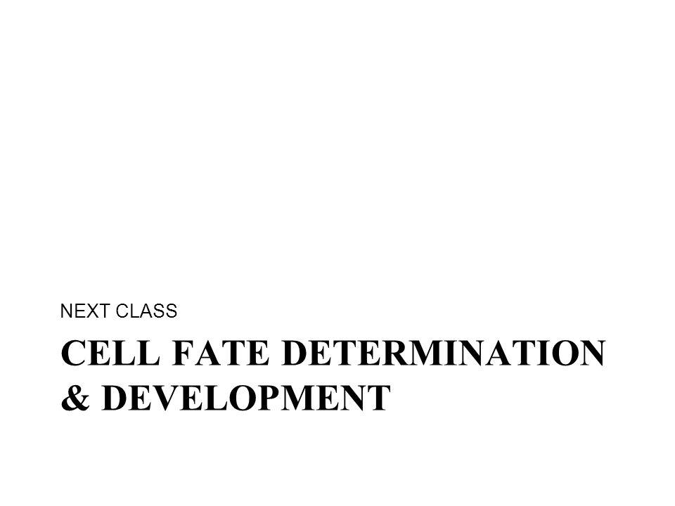 CELL FATE DETERMINATION & DEVELOPMENT NEXT CLASS