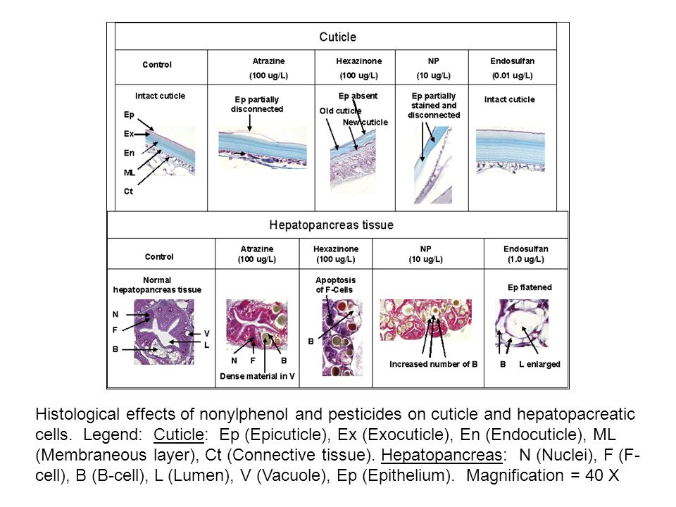 Histological effects of nonylphenol and pesticides on cuticle and hepatopacreatic cells.