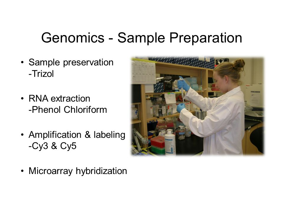 Genomics - Sample Preparation Sample preservation -Trizol RNA extraction -Phenol Chloriform Amplification & labeling -Cy3 & Cy5 Microarray hybridization