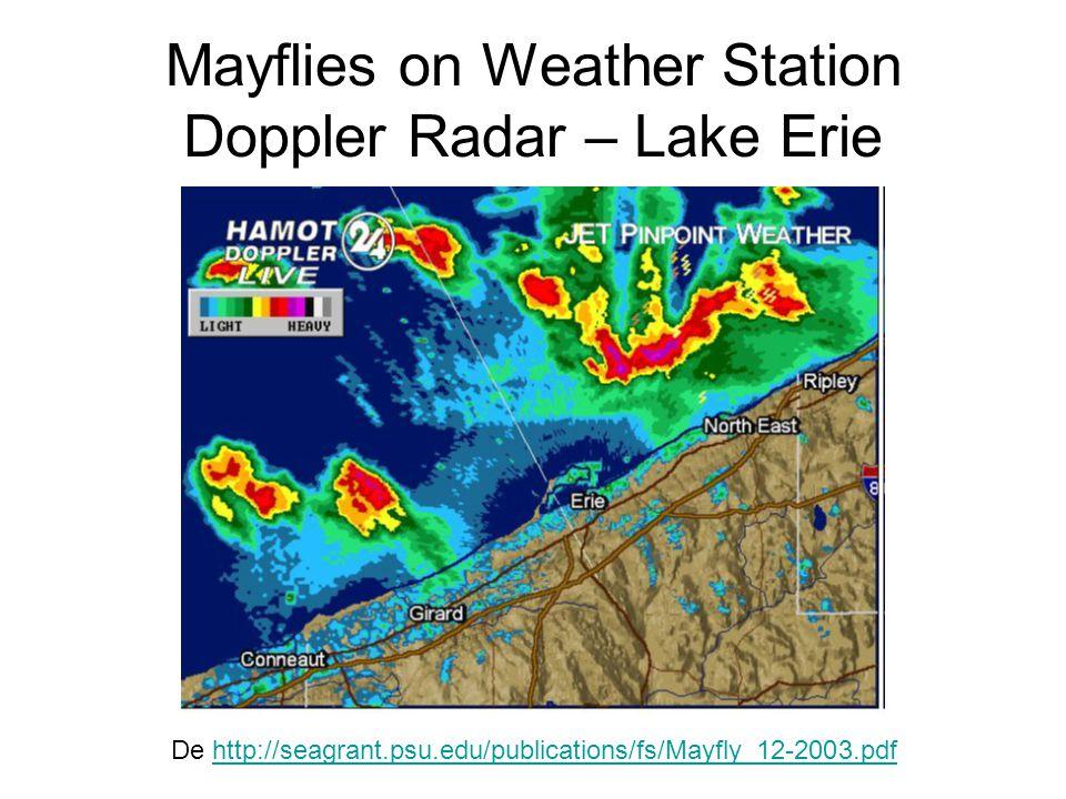 Mayflies on Weather Station Doppler Radar – Lake Erie De http://seagrant.psu.edu/publications/fs/Mayfly_12-2003.pdfhttp://seagrant.psu.edu/publication
