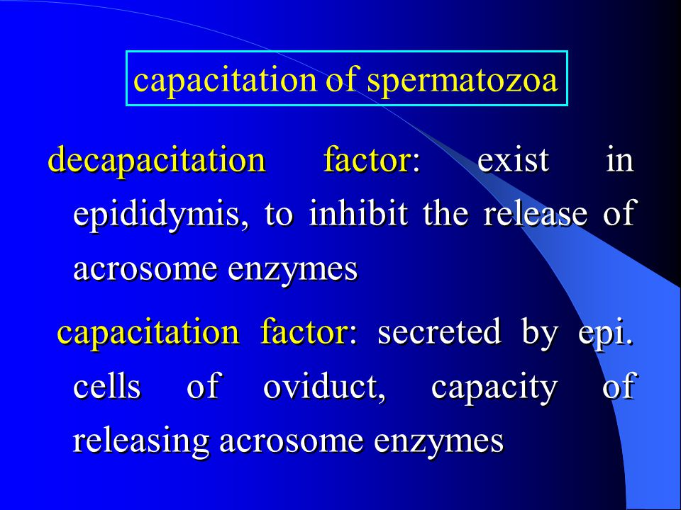 decapacitation factor: exist in epididymis, to inhibit the release of acrosome enzymes capacitation factor: secreted by epi.