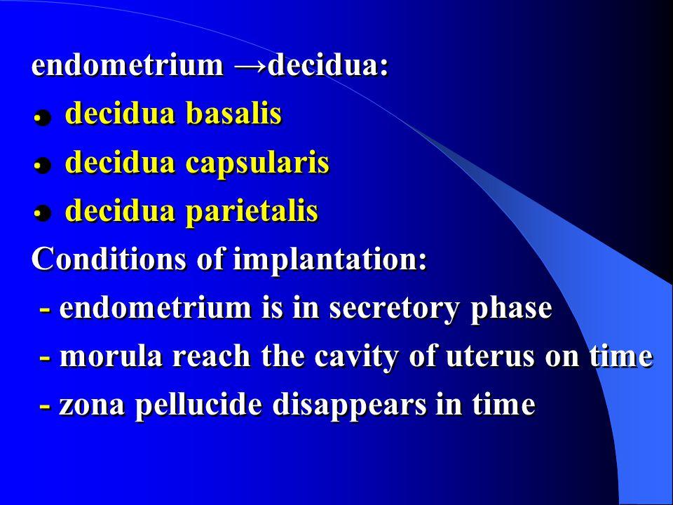 endometrium →decidua: decidua basalis decidua capsularis decidua parietalis Conditions of implantation: - endometrium is in secretory phase - morula reach the cavity of uterus on time - zona pellucide disappears in time endometrium →decidua: decidua basalis decidua capsularis decidua parietalis Conditions of implantation: - endometrium is in secretory phase - morula reach the cavity of uterus on time - zona pellucide disappears in time