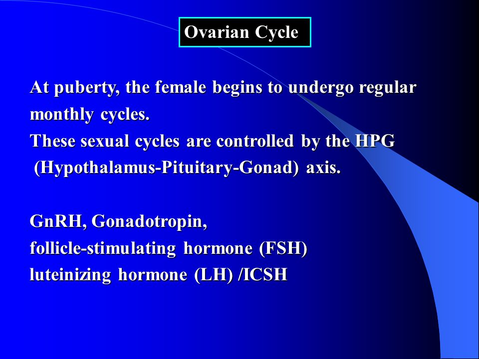 Ovarian Cycle At puberty, the female begins to undergo regular monthly cycles.