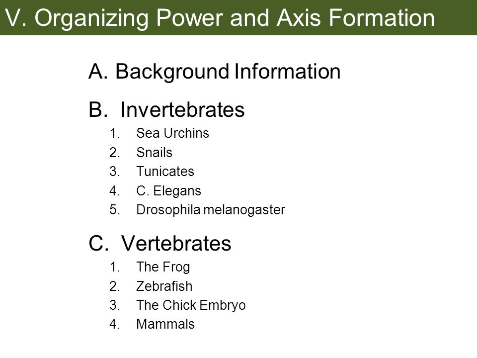 V.Organizing Power and Axis Formation A.Background Information B.