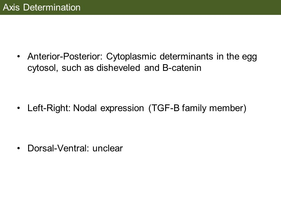 Axis Determination Anterior-Posterior: Cytoplasmic determinants in the egg cytosol, such as disheveled and B-catenin Left-Right: Nodal expression (TGF-B family member) Dorsal-Ventral: unclear