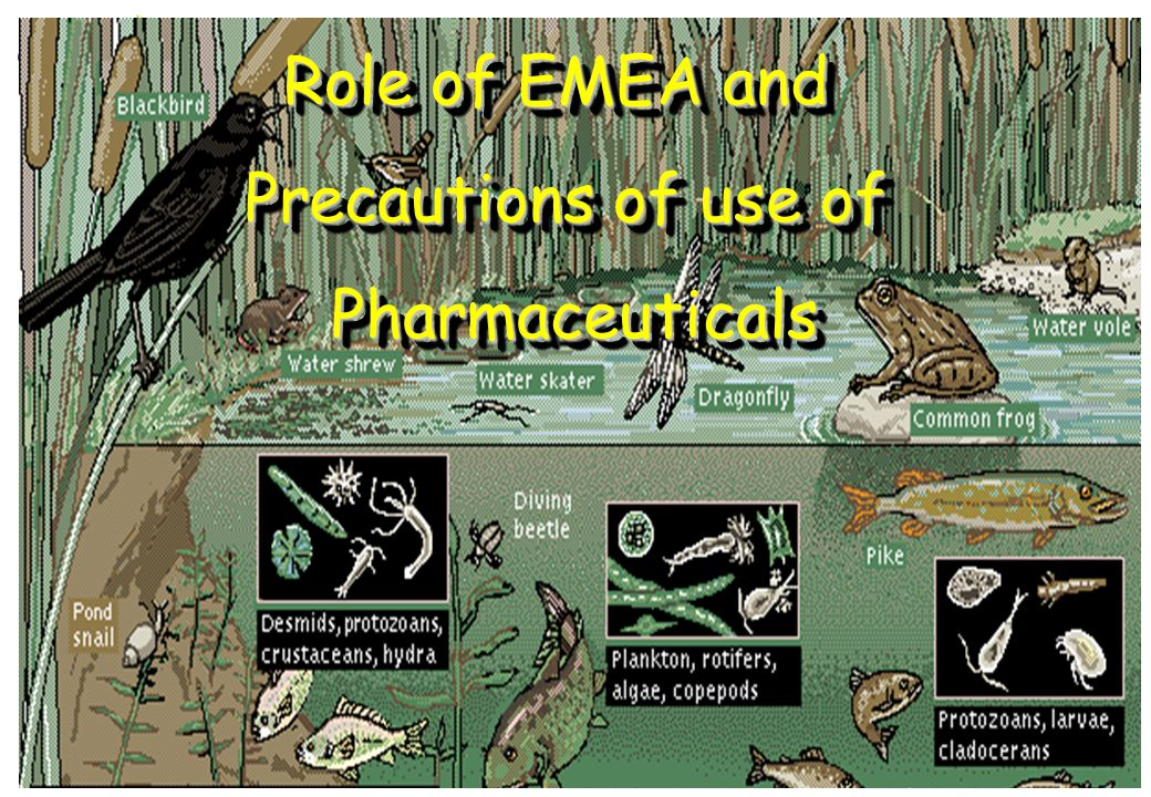 Conference Uppsala, 10-11 Nov 2009Jean-Marc Vidal (EMEA) 20 Role of EMEA and Precautions of use of Pharmaceuticals Role of EMEA and Precautions of use of Pharmaceuticals