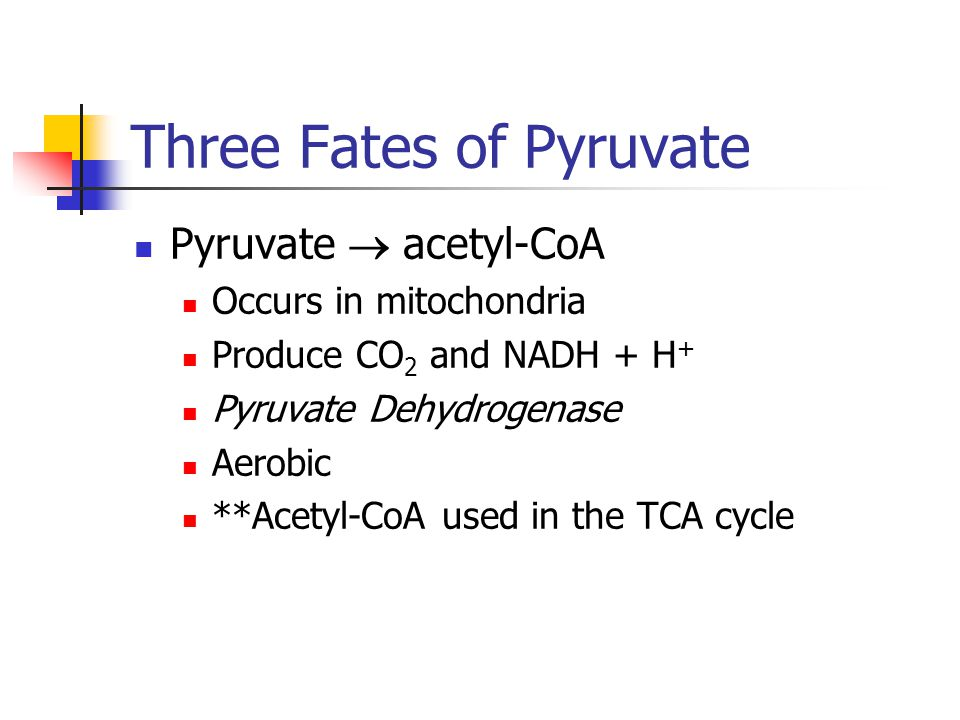 Three Fates of Pyruvate Pyruvate  acetyl-CoA Occurs in mitochondria Produce CO 2 and NADH + H + Pyruvate Dehydrogenase Aerobic **Acetyl-CoA used in the TCA cycle