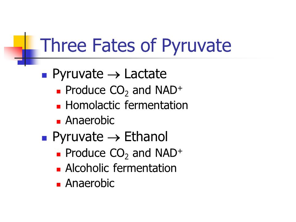 Three Fates of Pyruvate Pyruvate  Lactate Produce CO 2 and NAD + Homolactic fermentation Anaerobic Pyruvate  Ethanol Produce CO 2 and NAD + Alcoholic fermentation Anaerobic
