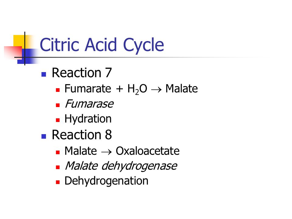 Citric Acid Cycle Reaction 7 Fumarate + H 2 O  Malate Fumarase Hydration Reaction 8 Malate  Oxaloacetate Malate dehydrogenase Dehydrogenation