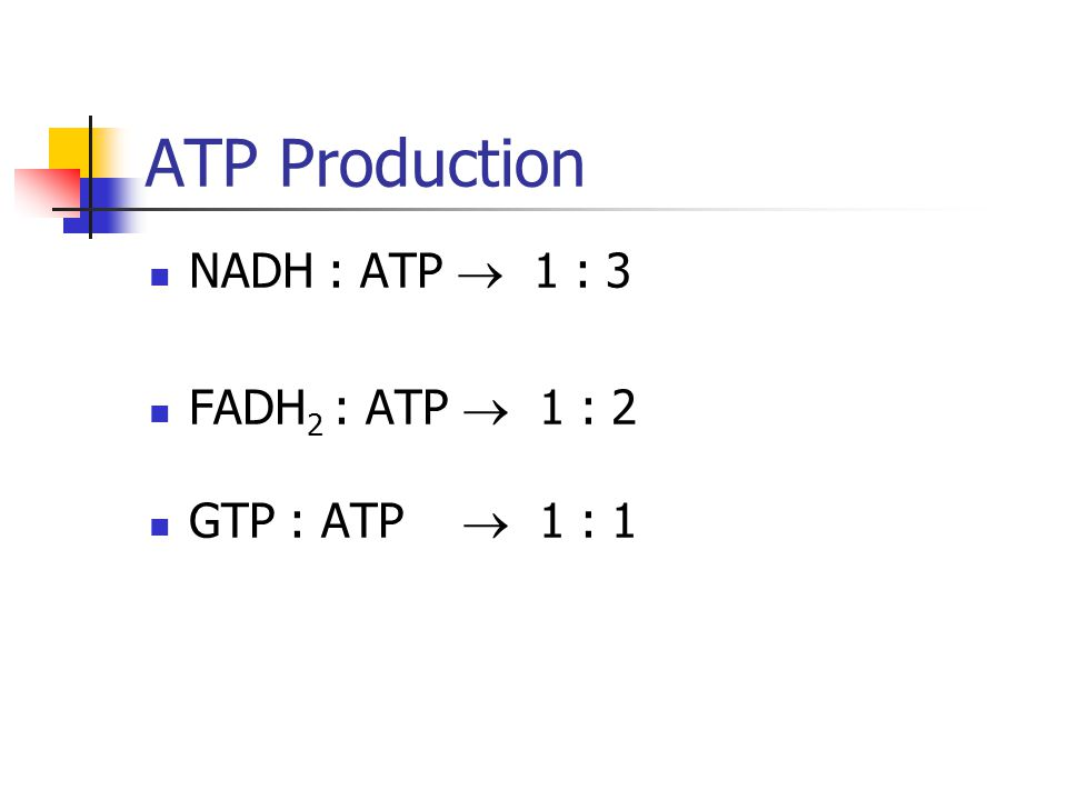 ATP Production NADH : ATP  1 : 3 FADH 2 : ATP  1 : 2 GTP : ATP  1 : 1