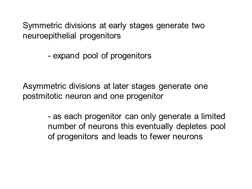Symmetric divisions at early stages generate two neuroepithelial progenitors - expand pool of progenitors Asymmetric divisions at later stages generate one postmitotic neuron and one progenitor - as each progenitor can only generate a limited number of neurons this eventually depletes pool of progenitors and leads to fewer neurons