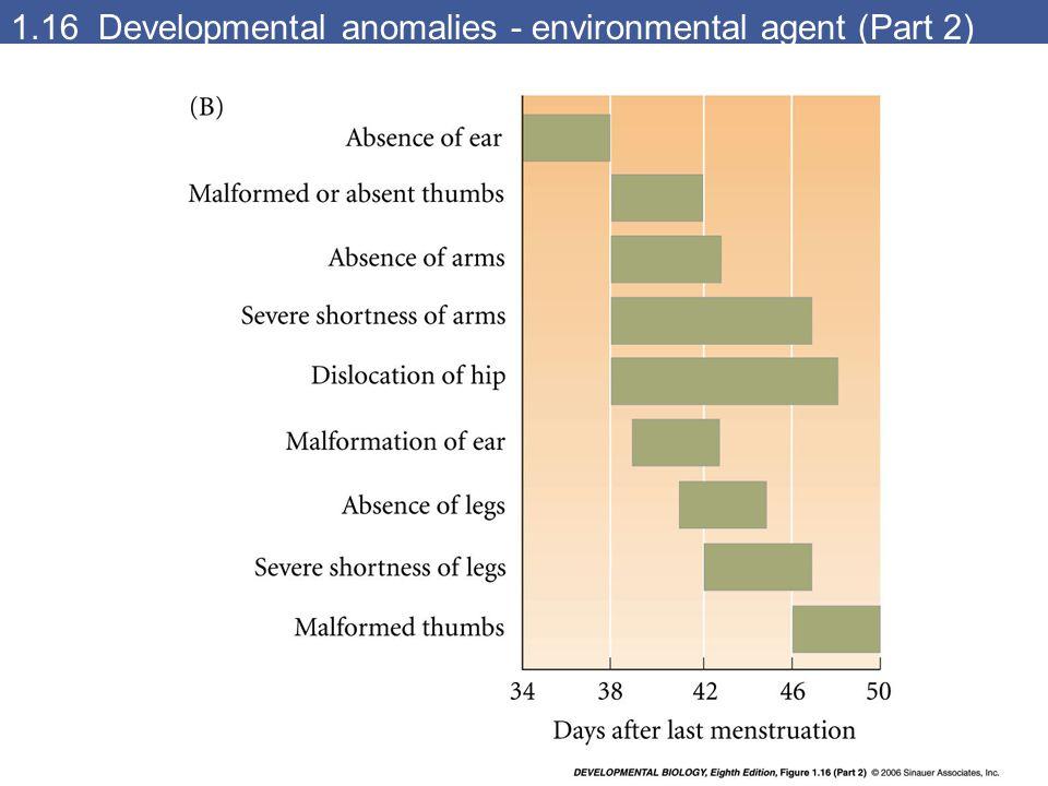 1.16 Developmental anomalies - environmental agent (Part 2)
