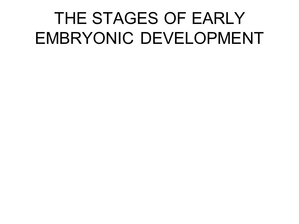 THE STAGES OF EARLY EMBRYONIC DEVELOPMENT
