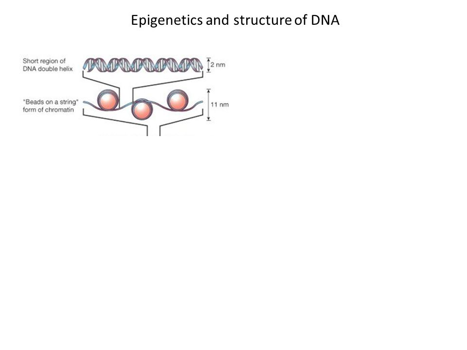 Epigenetics and structure of DNA http://www.studyblue.com/notes/note/n/cha pter-4-dna-chromosomes-and- genomes/deck/1404309