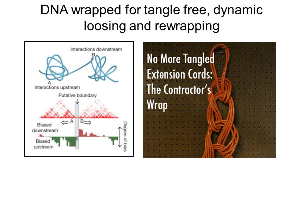DNA wrapped for tangle free, dynamic loosing and rewrapping