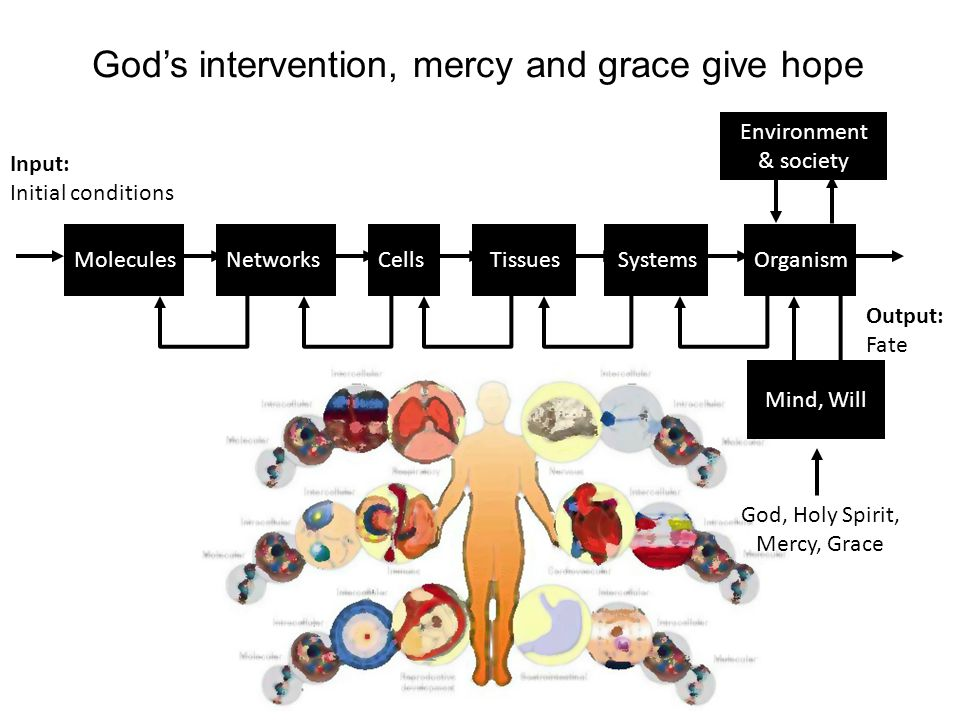 MoleculesNetworksCellsTissuesSystemsOrganism God's intervention, mercy and grace give hope Environment & society Input: Initial conditions Output: Fate Mind, Will God, Holy Spirit, Mercy, Grace