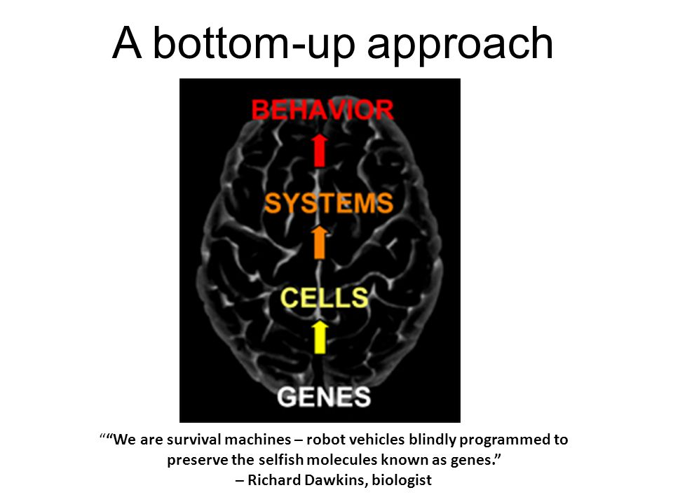 MoleculesNetworksCellsTissuesSystemsOrganism A Reductionist view of Biology Environment & society Input: Initial conditions Output: Fate