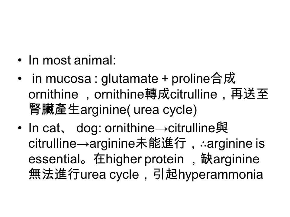 In most animal: in mucosa : glutamate + proline 合成 ornithine , ornithine 轉成 citrulline ,再送至 腎臟產生 arginine( urea cycle) In cat 、 dog: ornithine→citrull