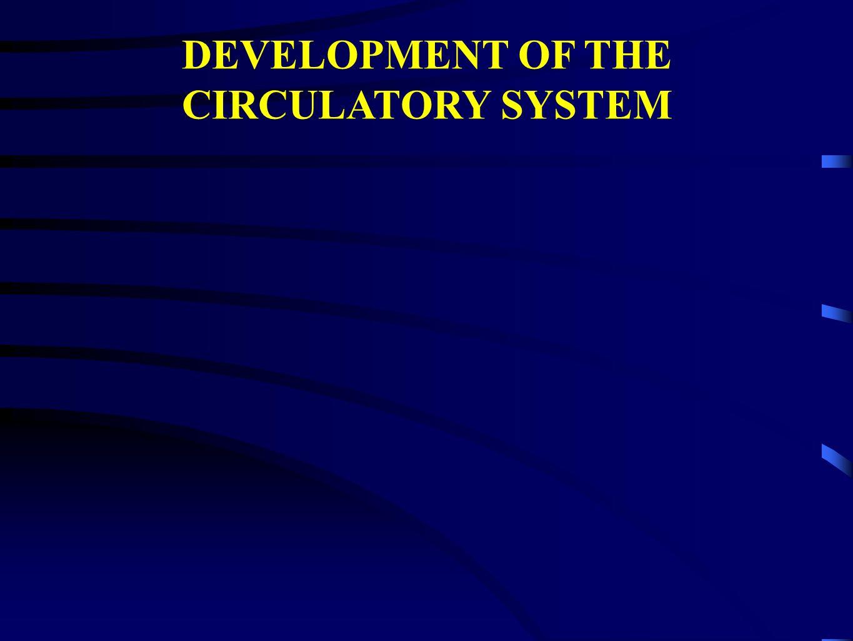 DEVELOPMENT OF THE CIRCULATORY SYSTEM