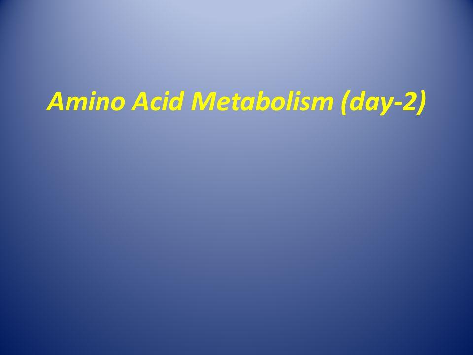 Amino Acid Metabolism (day-2)
