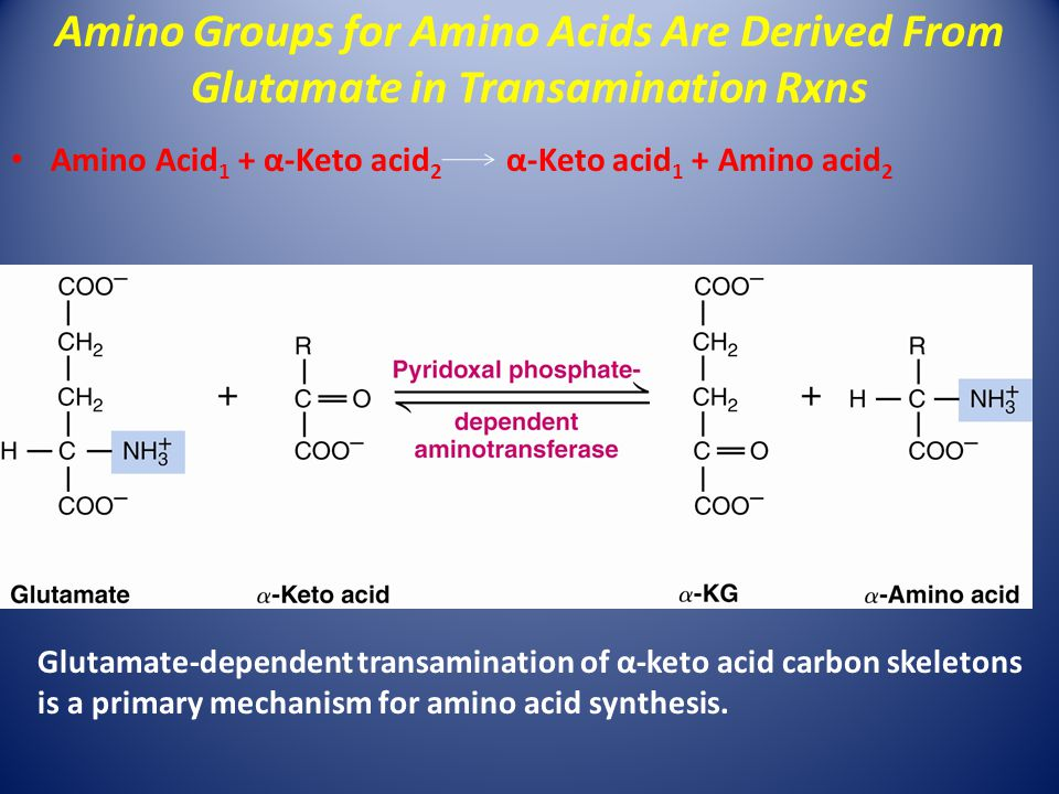 Amino Acid 1 + α-Keto acid 2 α-Keto acid 1 + Amino acid 2 Glutamate-dependent transamination of α-keto acid carbon skeletons is a primary mechanism for amino acid synthesis.