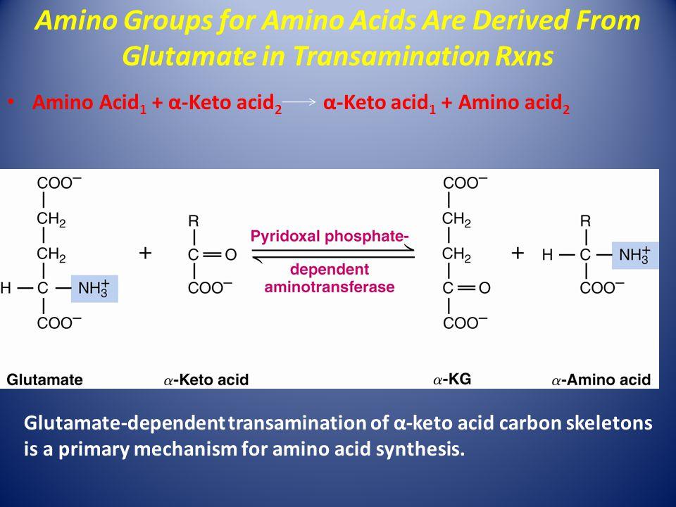 Amino Acid 1 + α-Keto acid 2 α-Keto acid 1 + Amino acid 2 Glutamate-dependent transamination of α-keto acid carbon skeletons is a primary mechanism fo