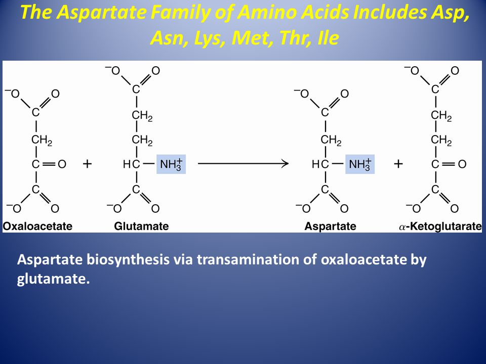 The Aspartate Family of Amino Acids Includes Asp, Asn, Lys, Met, Thr, Ile Aspartate biosynthesis via transamination of oxaloacetate by glutamate.