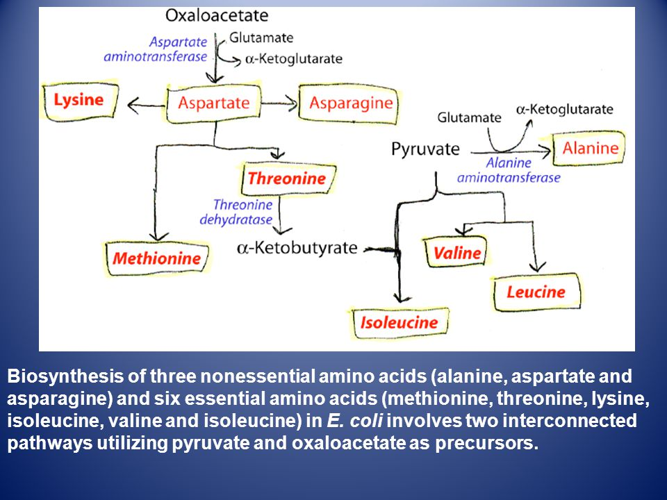 Biosynthesis of three nonessential amino acids (alanine, aspartate and asparagine) and six essential amino acids (methionine, threonine, lysine, isole