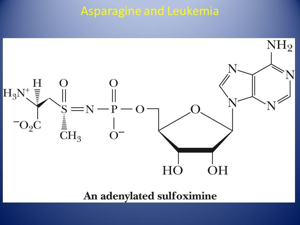 Asparagine and Leukemia
