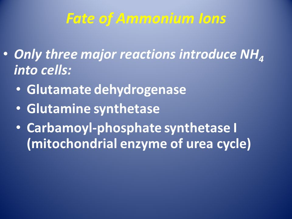 Fate of Ammonium Ions Only three major reactions introduce NH 4 into cells: Glutamate dehydrogenase Glutamine synthetase Carbamoyl-phosphate synthetase I (mitochondrial enzyme of urea cycle)