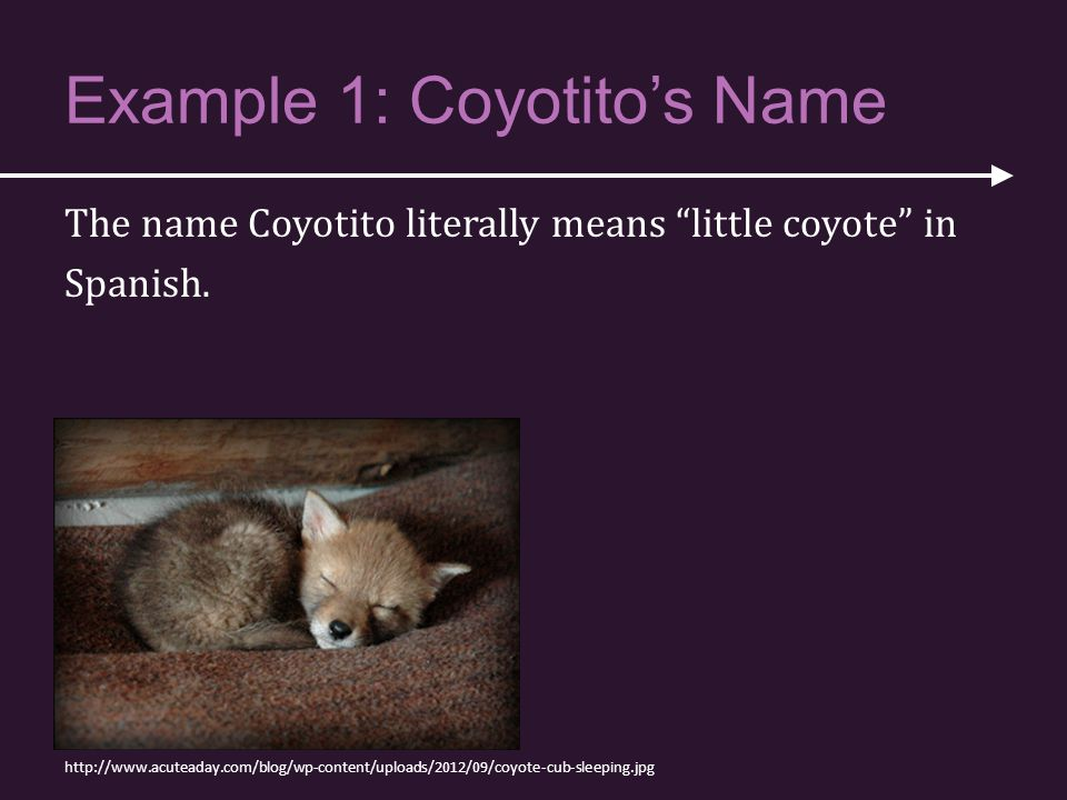 "Example 1: Coyotito's Name The name Coyotito literally means ""little coyote"" in Spanish. http://www.acuteaday.com/blog/wp-content/uploads/2012/09/coyo"