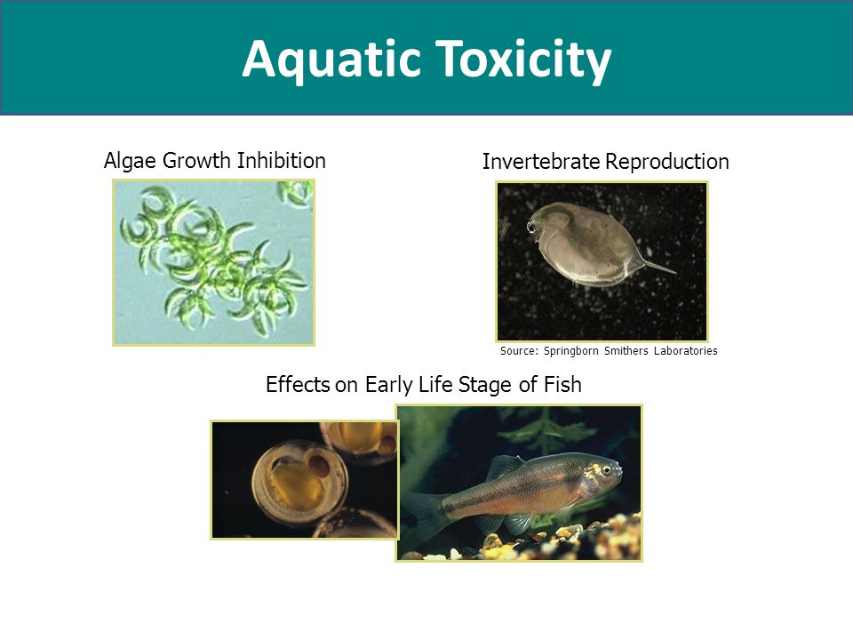 Aquatic Toxicity Algae Growth Inhibition Invertebrate Reproduction Effects on Early Life Stage of Fish Source: Springborn Smithers Laboratories