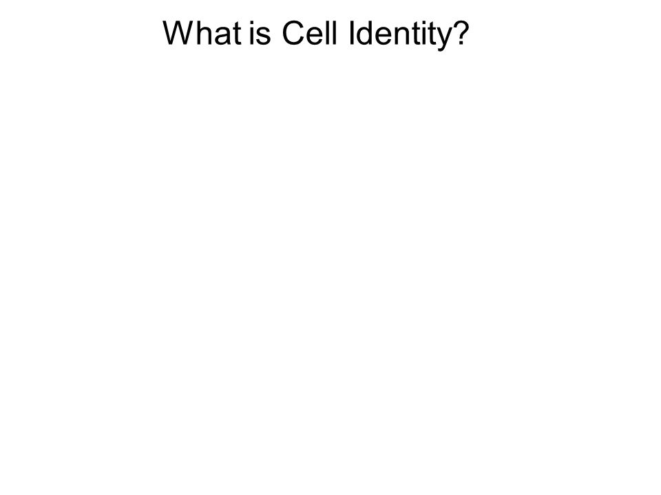 What is Cell Identity