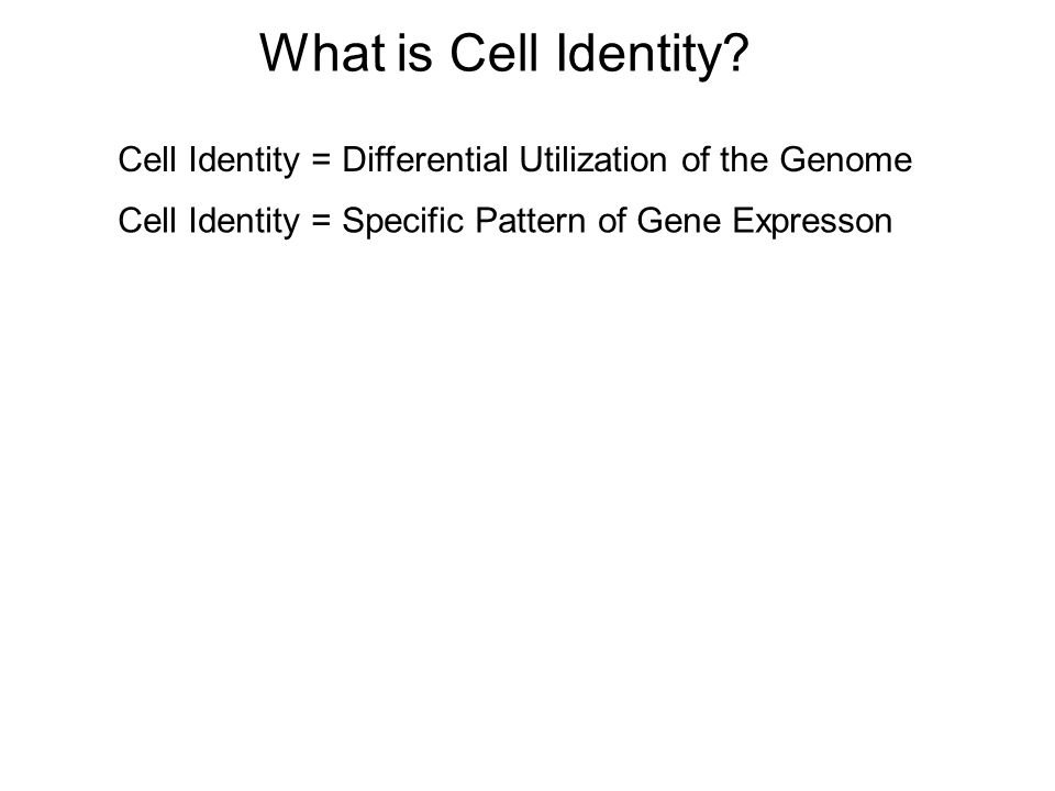 What is Cell Identity.