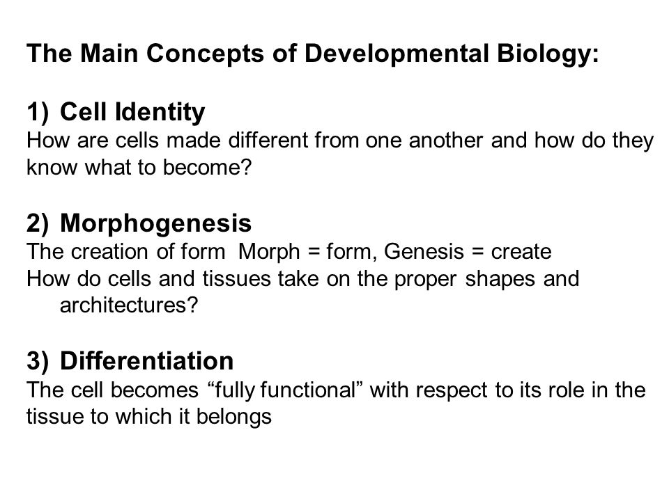 The Main Concepts of Developmental Biology: 1)Cell Identity How are cells made different from one another and how do they know what to become.