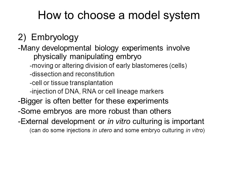 How to choose a model system 2) Embryology -Many developmental biology experiments involve physically manipulating embryo -moving or altering division of early blastomeres (cells) -dissection and reconstitution -cell or tissue transplantation -injection of DNA, RNA or cell lineage markers -Bigger is often better for these experiments -Some embryos are more robust than others -External development or in vitro culturing is important (can do some injections in utero and some embryo culturing in vitro)