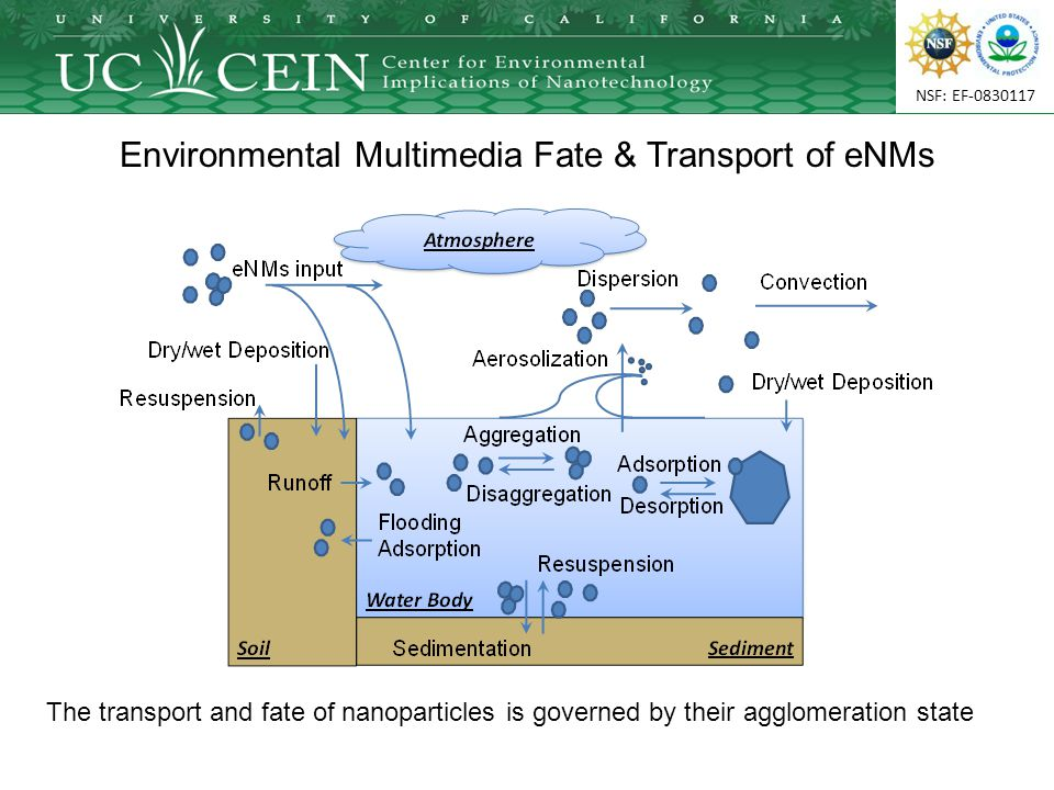 NSF: EF-0830117 Environmental Multimedia Fate & Transport of eNMs The transport and fate of nanoparticles is governed by their agglomeration state