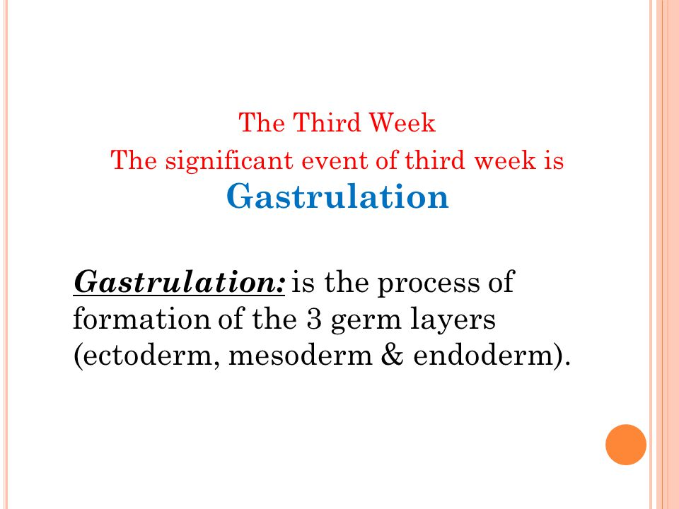 G ASTRULATION The process by which the bilaminar disc is converted into a trilaminar disc It is the beginning of morphogenesis (formation of body form) Consists of formation of the primitive streak, the three germ layers & the notochord Embryo is referred to as a Gastrula
