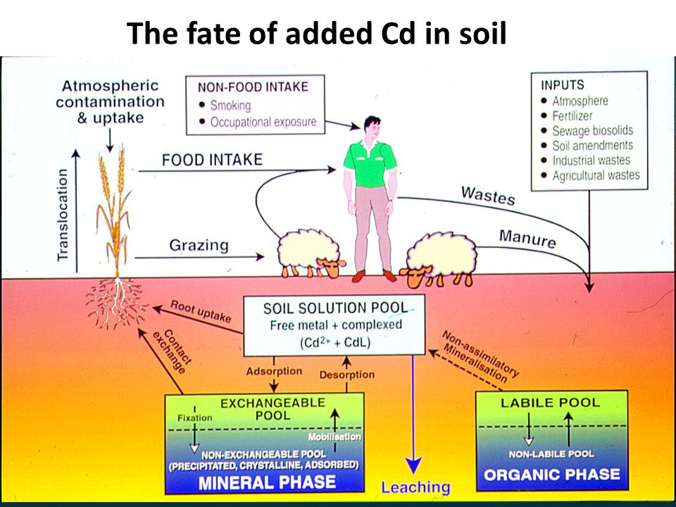 The fate of added Cd in soil