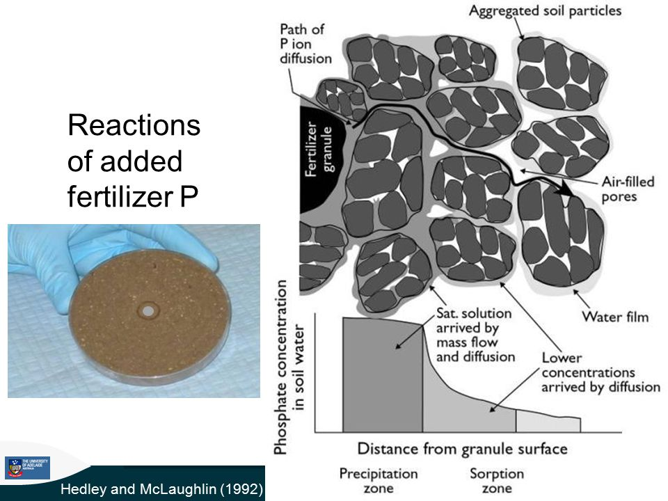 Reactions of added fertilizer P Hedley and McLaughlin (1992)